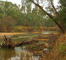 Fallen limb in the river by ndarby1