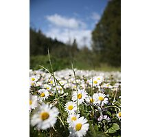 Mini Many Flowers Photographic Print