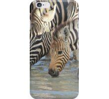 Zebra - African Wildlife Background - Pleasure of Water iPhone Case/Skin