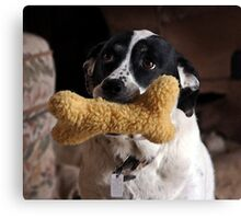 Play With Me - Please! Canvas Print