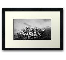 Trees Going Nowhere Framed Print