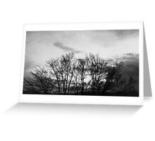 Trees Going Nowhere Greeting Card