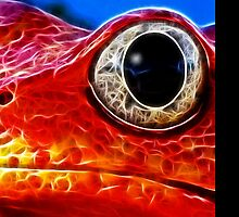 Red Frog (smallest) by eltdesigns