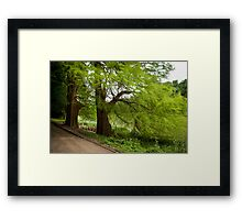 Two monumental swamp cypresses Framed Print