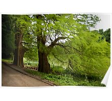 Two monumental swamp cypresses Poster