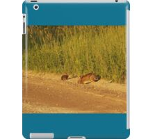 Mother And Baby Rabbit                                 Pentax X-5 16 MP iPad Case/Skin