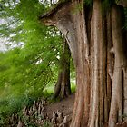 Under the swamp cypresses by steppeland