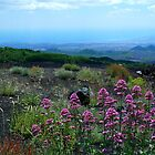 Etna Flowers by Janone