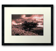 Tree Framed Print