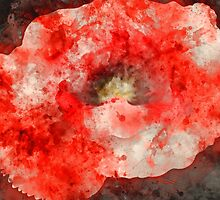 Red Poppy Watercolor by TinaGraphics