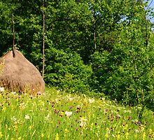 Beautiful countryside landscape with flowers, grass and haystack by Stanciuc