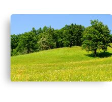 Beautiful countryside landscape with flowers Canvas Print