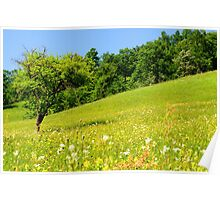 Beautiful countryside landscape in Transylvania Poster