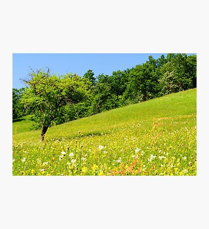 Beautiful countryside landscape in Transylvania Photographic Print