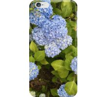 Floral Print Blue Hydrangeas iPhone Case/Skin