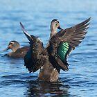 Duck Wings by byronbackyard