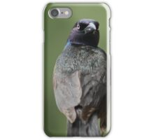 dramatic boat-tailed grackle iPhone Case/Skin