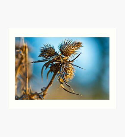 Beauty in lifeless nature Art Print