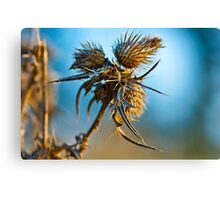 Beauty in lifeless nature Canvas Print