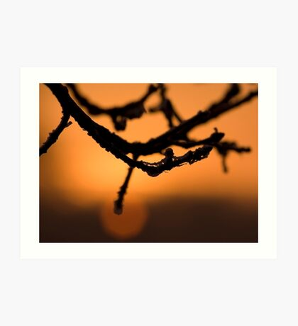 Branch in the sunrise Art Print