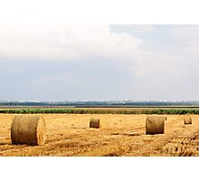 Golden Hay Bales on field after harvesting Photographic Print