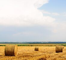Golden Hay Bales on field after harvesting by Stanciuc