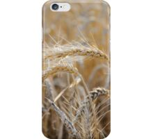 Ripe heads of golden wheat in the field iPhone Case/Skin