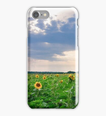 View of field with blooming sunflowers with sunset in background iPhone Case/Skin
