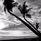 Pacific Paradise by djphoto