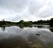 Duck in a Pond by Matt Keil