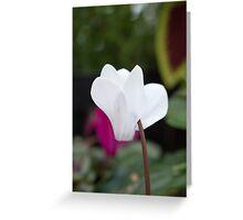 White Petal Flower Greeting Card