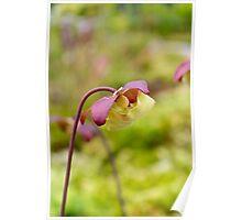 Beautiful Flower Poster