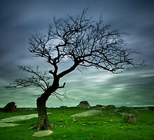 Dog Rocks Tree by Noeline R