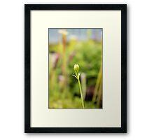 Single Green Bud Flower Framed Print