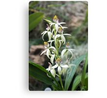 Small Orchids Canvas Print