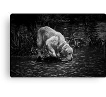 Pet in pond Canvas Print