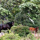 SARDEGNA - WILD HORSES by chiaraSibona