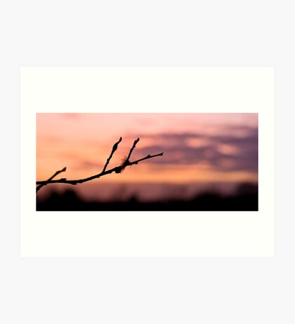Twig at dusk Art Print