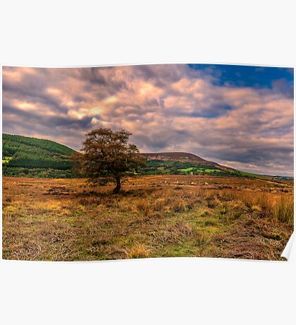 North Yorks Moors Poster