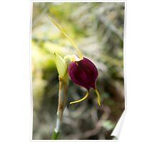 Velvet Orchid  Poster