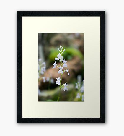 Snow white Flowers Framed Print