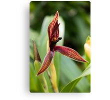 Single Red Orchid Canvas Print