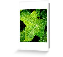 Wet Ivy Greeting Card
