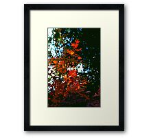 Abstract 281 Framed Print