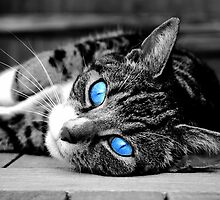 Blue eyed cat by LucyFreeman