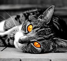 Orange eyed cat by LucyFreeman