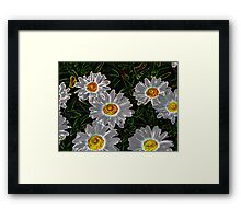 Daisey Ghosts Framed Print