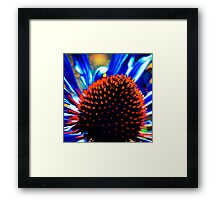 Thistle Burst (F.41) Framed Print