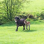 Mother & Foal. by Dave Staton