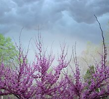 Storm Over Redbud Tree by StarryGardens